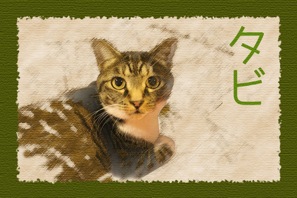 うちの猫 タビちゃん