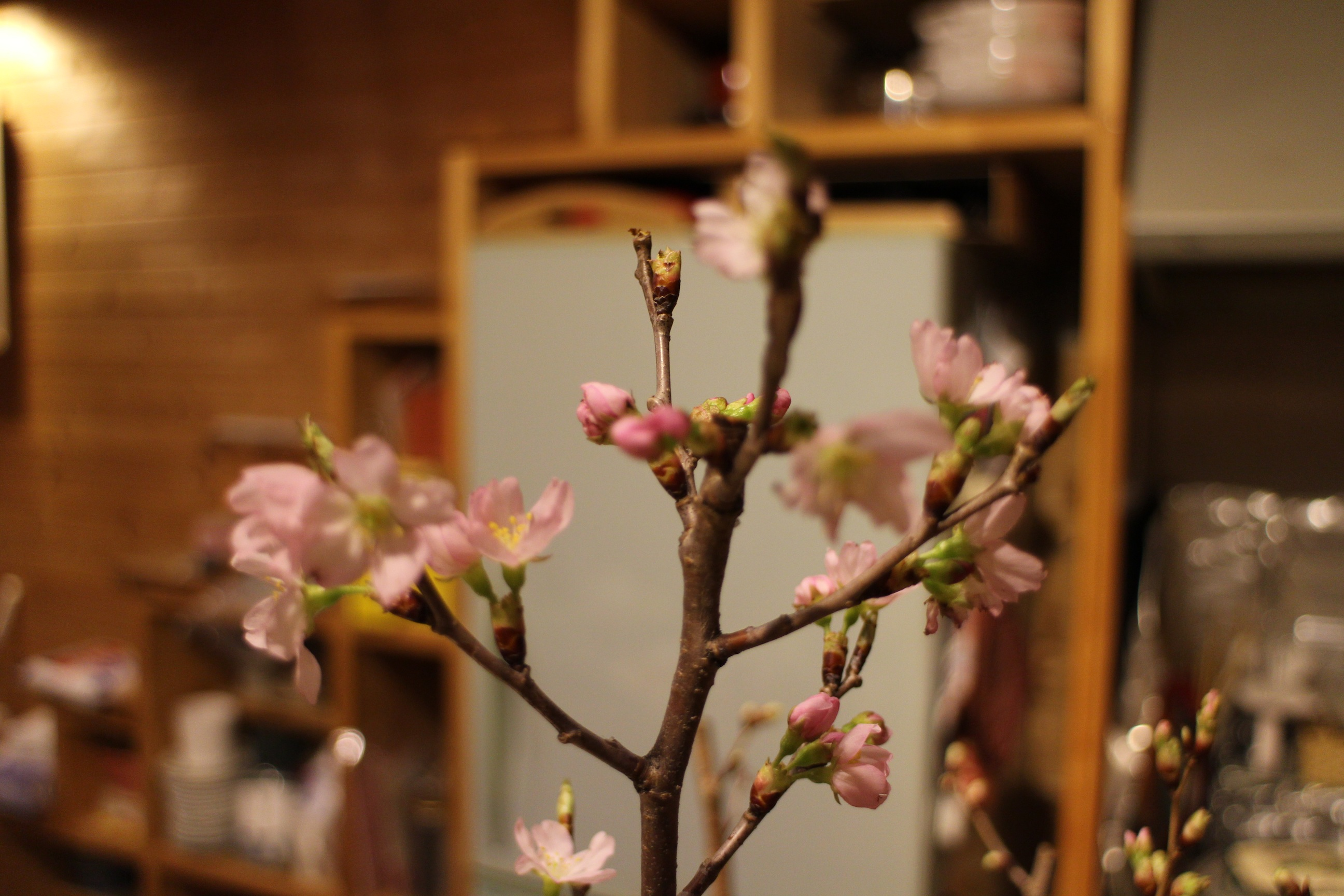 「いけ花」のちょっと心の温まる話